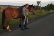 Łomna: Koń galopował na drodze krajowej