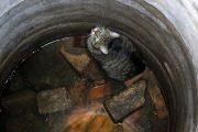 Pomiechówek: Kot wpadł do studni