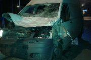 Sowia Wola: Łoś wbiegł pod samochód