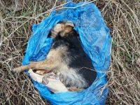 Zakroczym: Martwy pies w worku na śmieci wyrzucony do rowu