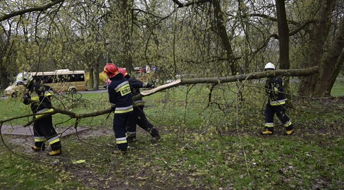 Modlin Twierdza: Strażacy usunęli zwisające gałęzie