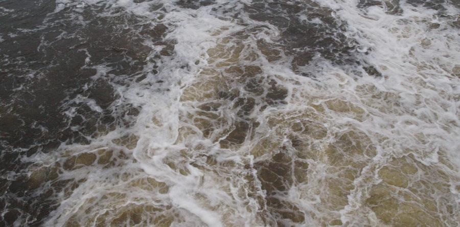 Czarnowo: Pies tonął w rzece Narwi