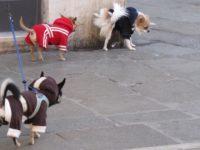 Nowy Dwór Maz: Akt oskarżenia w sprawie znęcania się nad psami