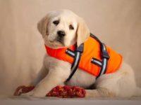 Modlin Twierdza: Psi ratownik wodny już wkrótce na rzece